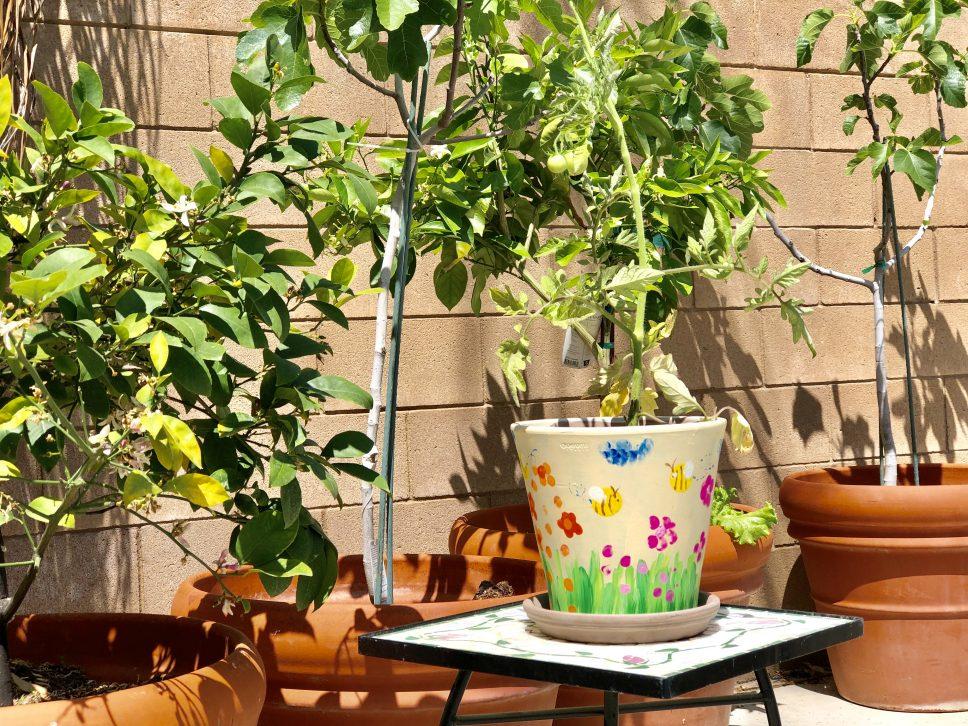 Plant Nursery Family-Activity final