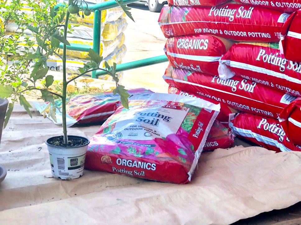 Plant Nursery Family-Activity step 1