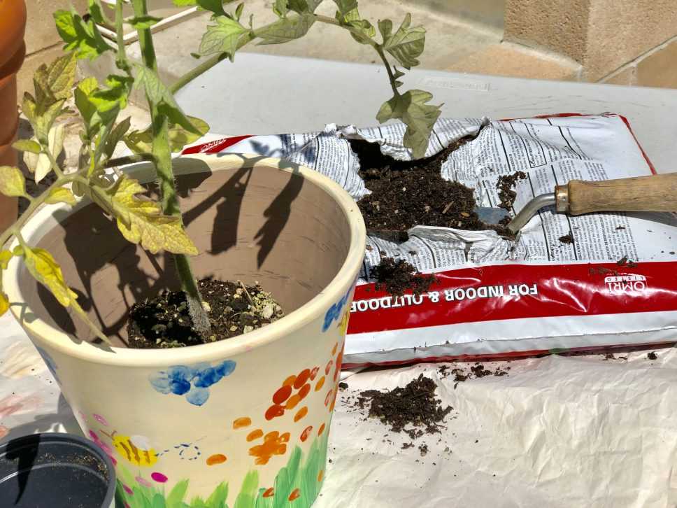 Plant Nursery Family-Activity step 6